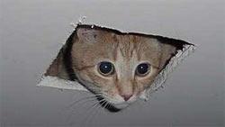 Домашний лекарь – кошка!