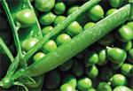 Источник белка с огорода - Зеленый горошек